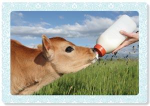 Week 2 Melk van mama of een beest?